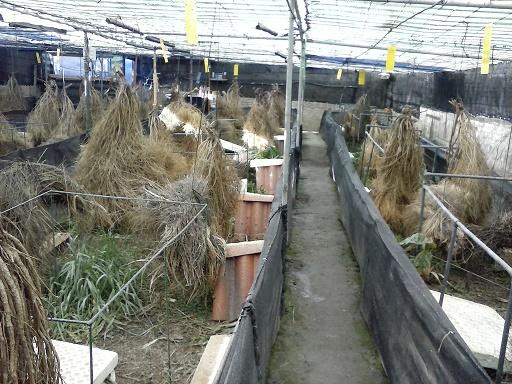 Caracoles La Alpujarra. Interior